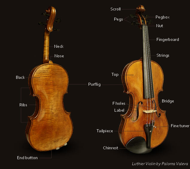 violin parts definition and pictures paloma valeva